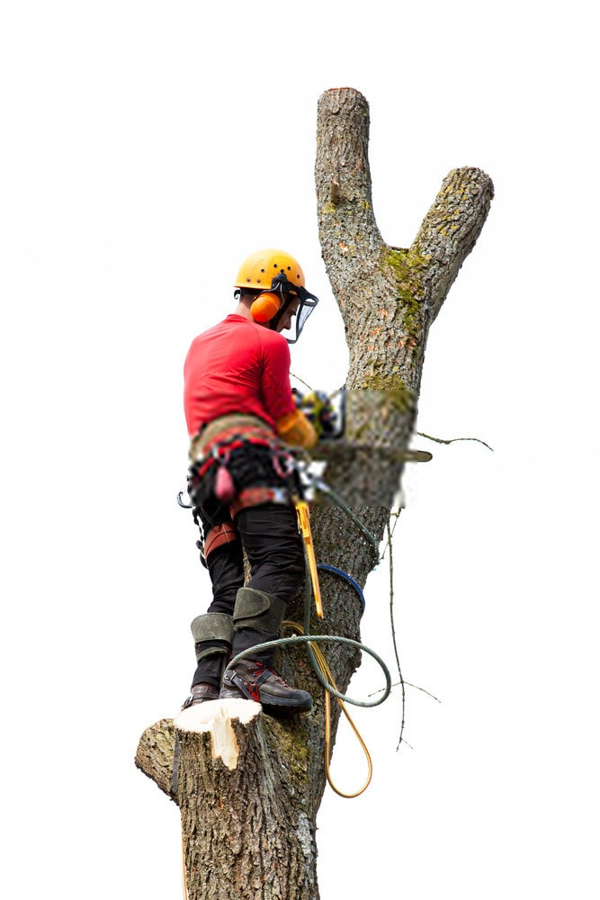 Tree Pruning And Maintenance