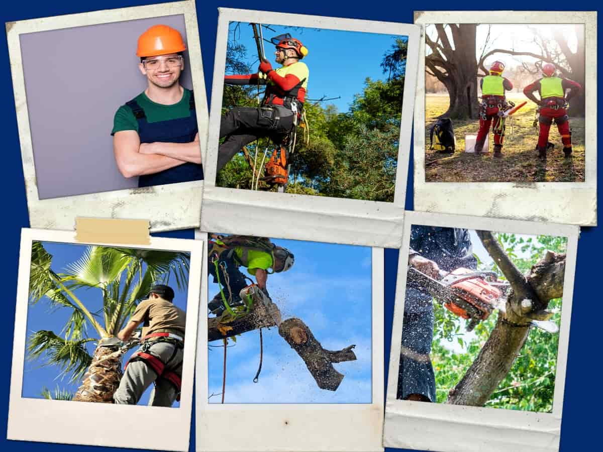 Townsville Tree Lopping