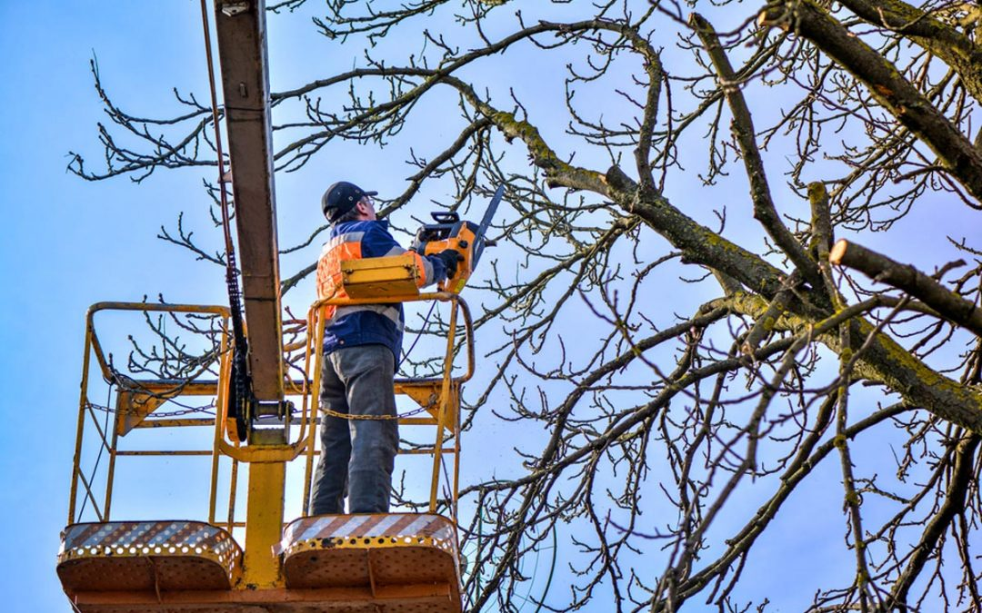 How Much Does Tree Care Cost?