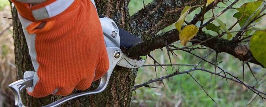 Benefits of A Tree Lopping Service