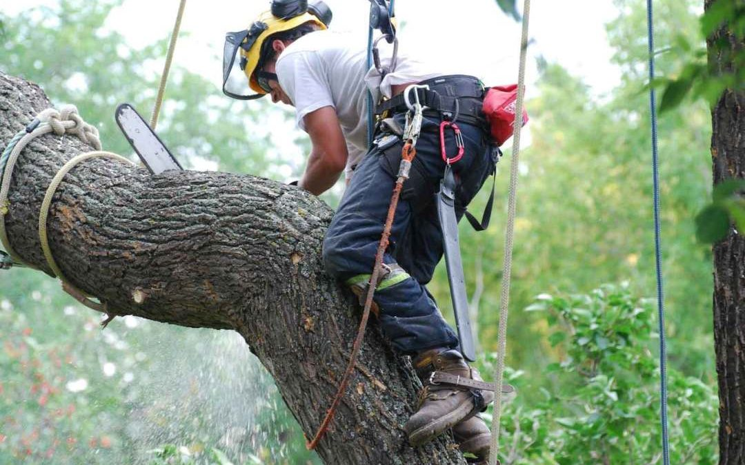 Importance of Hiring A Tree Lopper