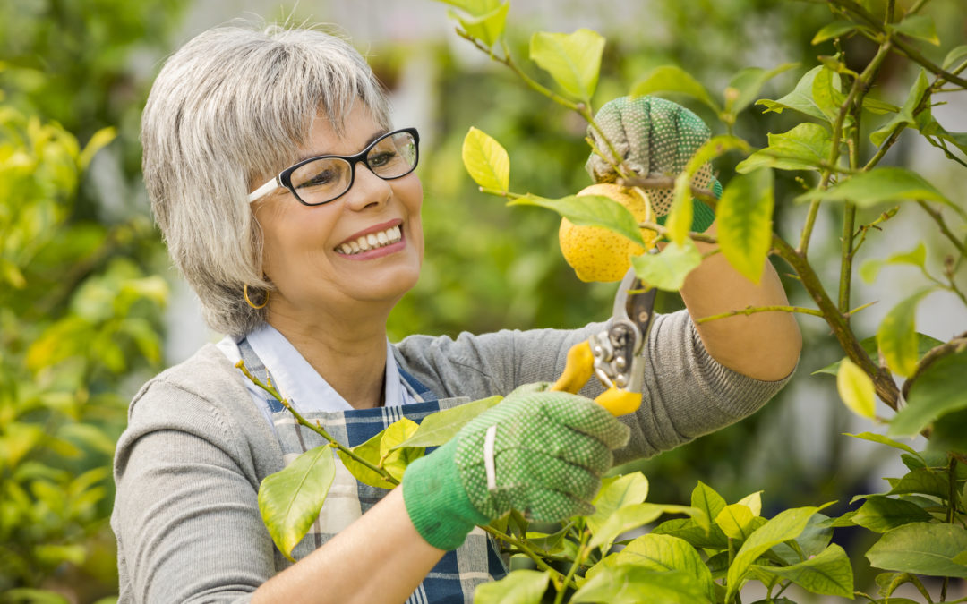 How To Take Care of A Fruit Tree Care