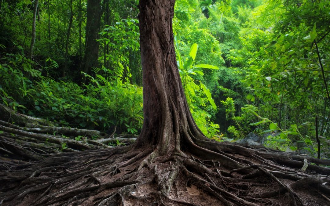 How Tree Roots Can Damage Your Home