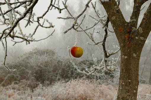 Tips for Winterizing Fruit Trees