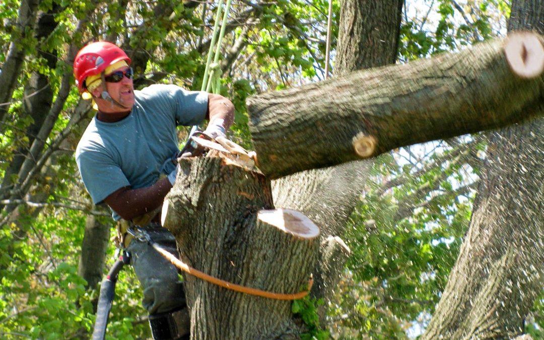 Types of Tree Service