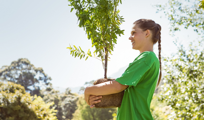 Do's and Don'ts of Caring a Tree