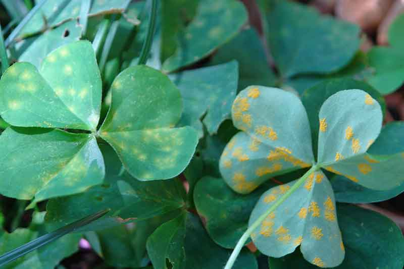How to Treat Fungal Disease in Spring