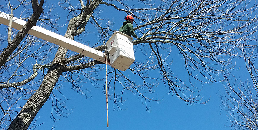 Is Tree Trimming the Same as Tree Pruning?