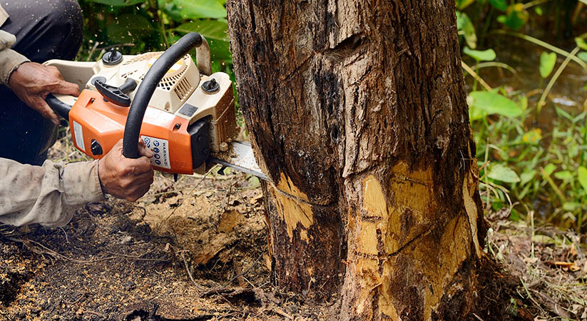 The Benefit of Tree Removal