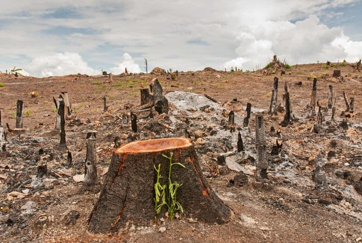 The Effects of Cutting Down Trees on the Ecosystem