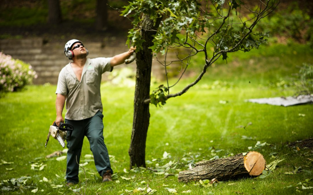 What Does a Tree Inspection Involve?