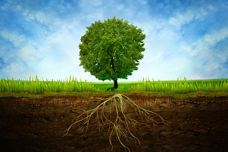 What is the Foundation of a Healthy Tree?