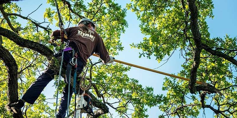 Why Do Trees Needs Proper Pruning and Trimming?