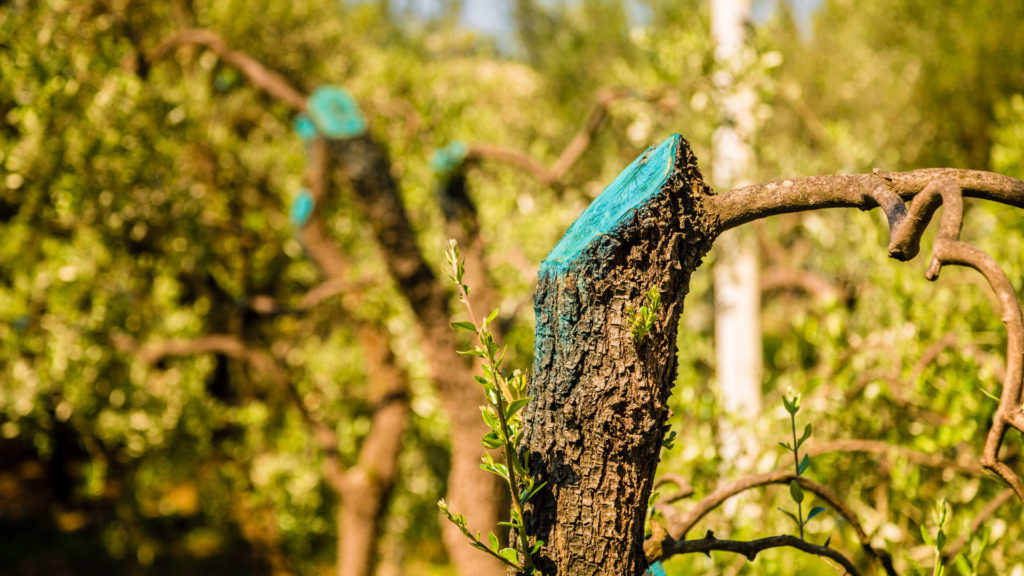 Why Do Trees Sometimes Need to Be Felled?