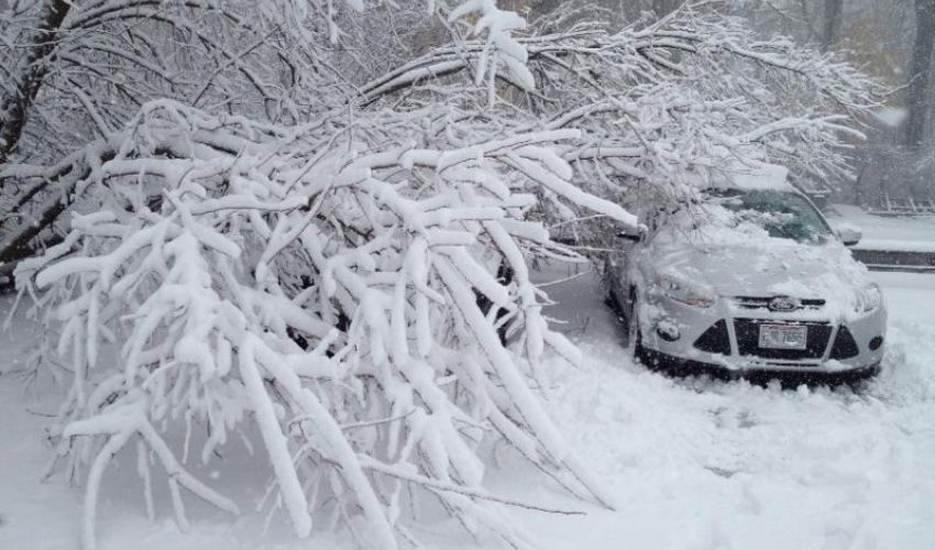 Does Ice Do Damage to Trees?