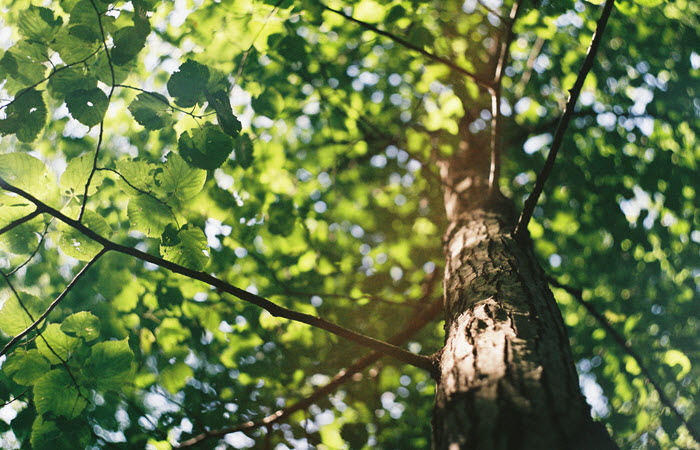 Essential Care For Your Backyard Trees
