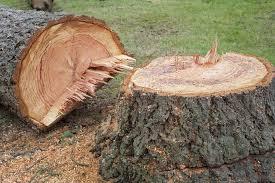 Fastest Way to Kill Trees