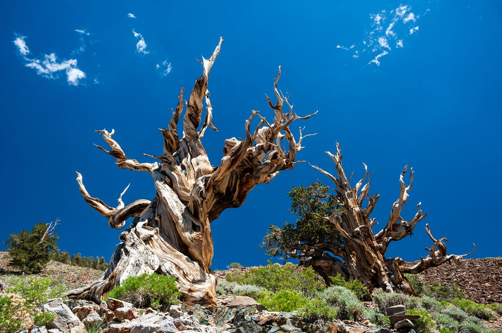 Lifespan Of A Tree – How Long Do They Live?
