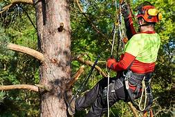 Importance And Risk Of Lopping A Tree
