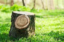 Pros And Cons Of Removing Pine Tree Stump