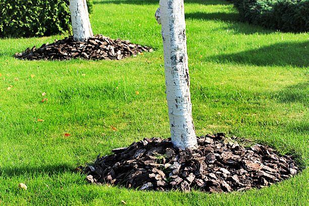 Prepare Your Trees For The Winter Season