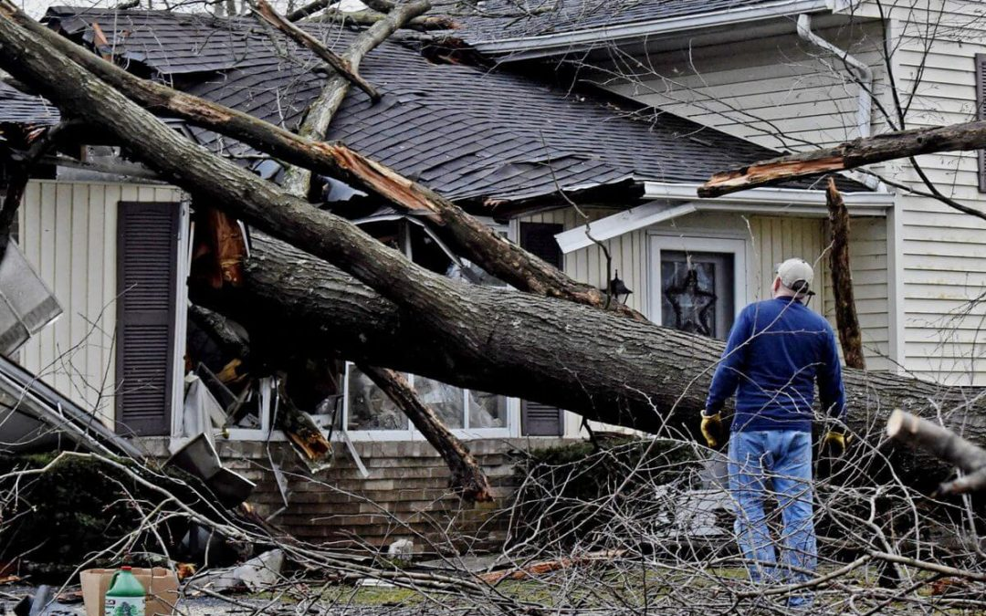Preventing Storm Damage To Your Trees