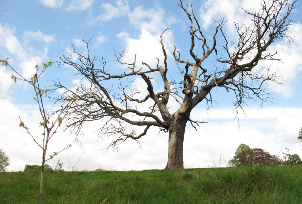 DO YOU HAVE A DEAD TREE? SIGNS THAT YOUR TREE IS DEAD