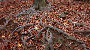Dealing With Surface Tree Root Issues