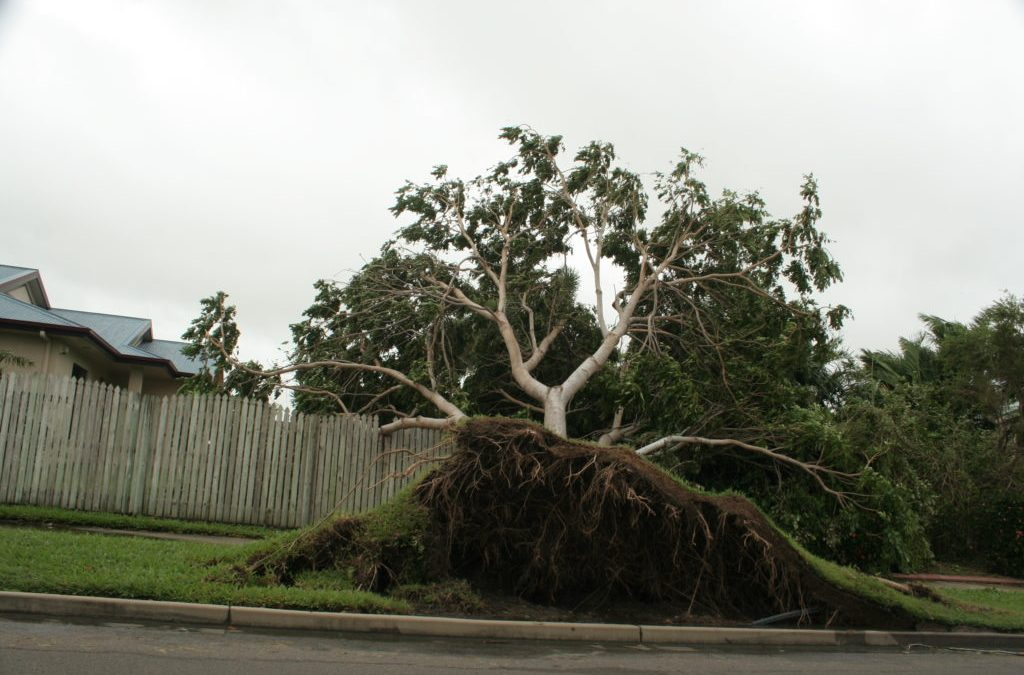 Warning Signs That Indicate Your Tree May Fall