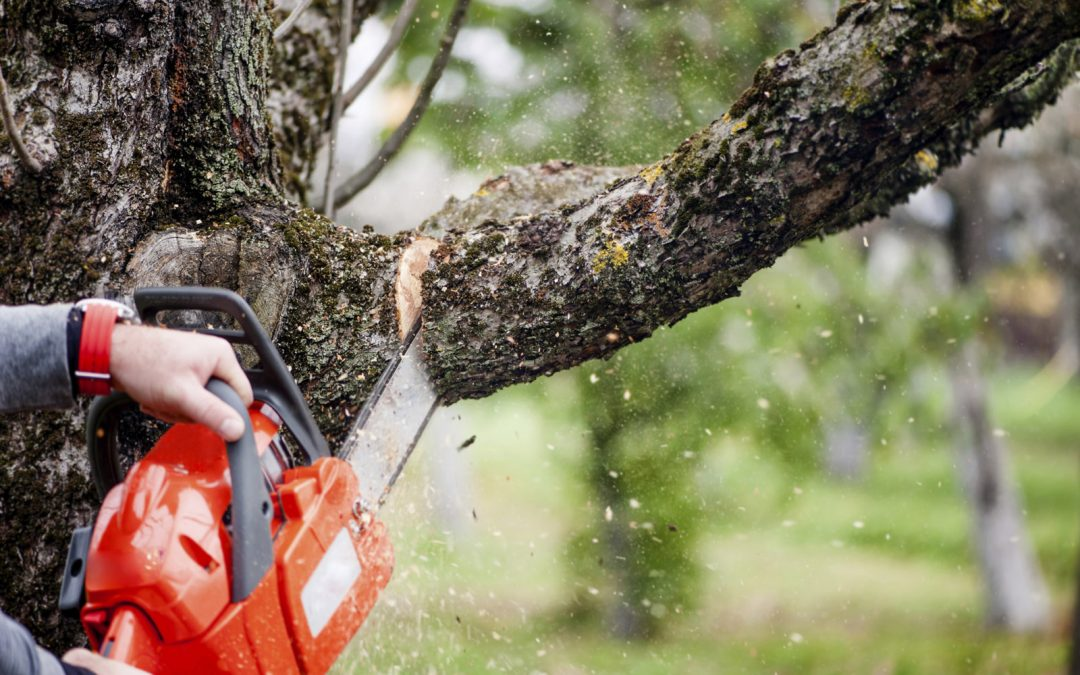 When Is the Best Time to Trim Your Trees?