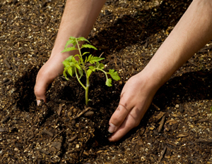 Tips to Know Before Transplanting Your Tree