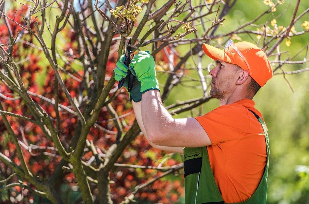 The Do's And Don'ts: Tree Pruning To Care Your Trees
