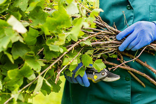 A Complete Guide to Hard Pruning Trees