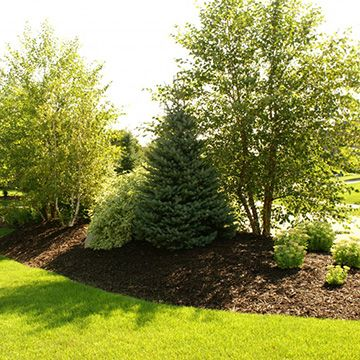 What Are Tree Berms For?: How Berms Work