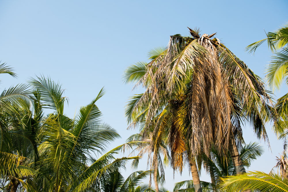 How To Bring A Dying Palm Tree Back To Life