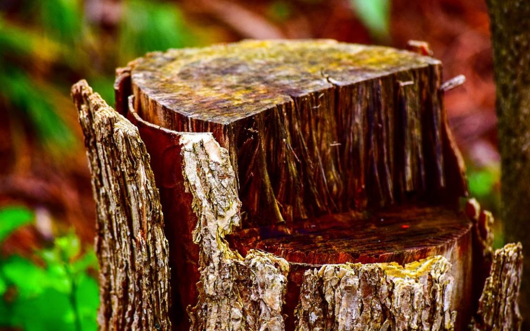 Should You Remove the Tree Stumps? Is It Necessary?
