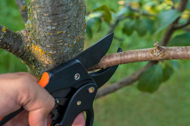 Effective Tips and Techniques for Tree Pruning