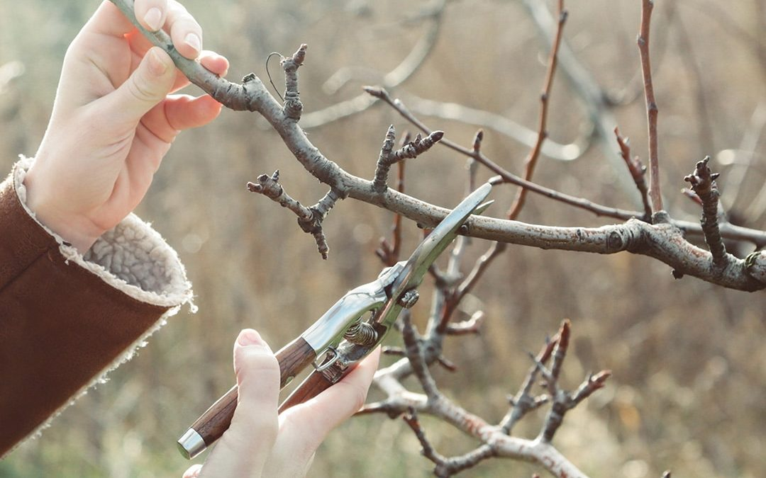 Best Time to Prune: Late Winter Pruning Guide