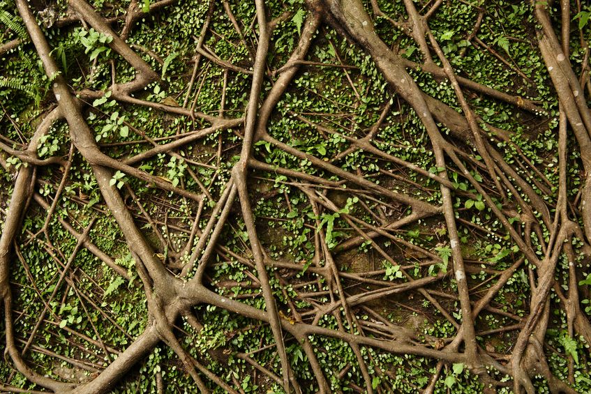 Covering Exposed Tree Roots In Your Backyard