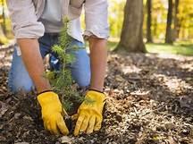 Tree Maintenance For A Long Lasting Tree Life