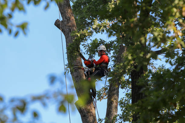 Tree Removal Costs: Prices To Cut Down A Tree By Size