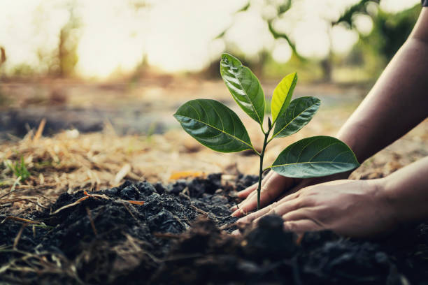 TIPS ON CARING FOR NEWLY PLANTED TREES