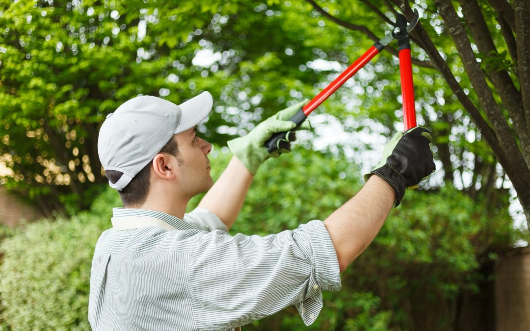 How To: Different Type Of Pruning A Tree And Benefits