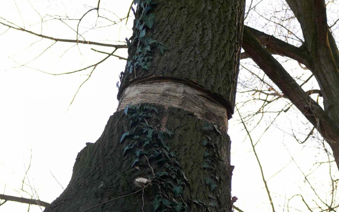 List To Avoid These Bad Things We Do to Our Trees