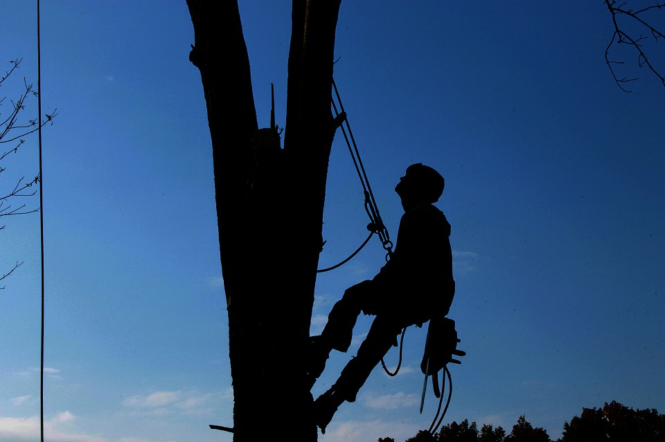 Tree Service: A Guide to Tree Care, Planting, Trimming and More