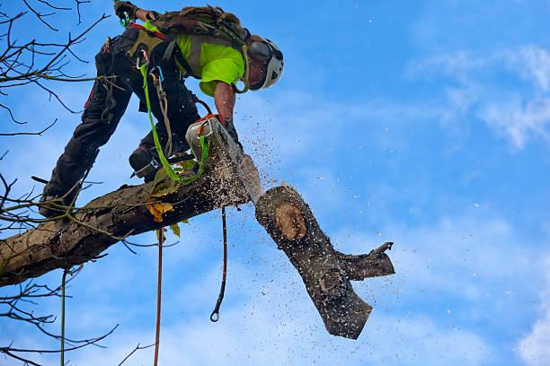 Expert Methods: PROPER TREE PRUNING TECHNIQUES