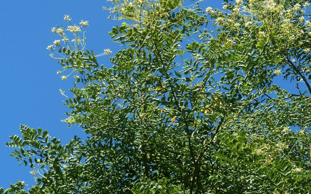 Top List: List Of Fast Growing Shade Trees For Your Yard