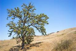 Tips How to Care for Trees in Drought