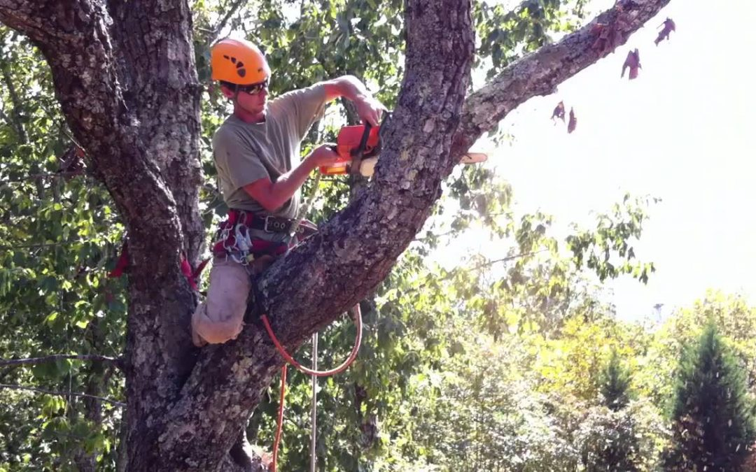 Signs of Best Time of Year to Trim, Prune Trees