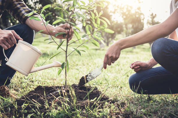 Guide And Tips For Planting A Tree In The Right Place